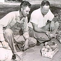 Grower and extension agent examine crop during 1950s