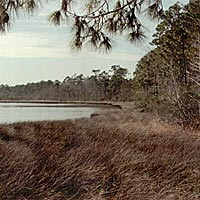 Weeks Bay and fringing salt marsh habitat