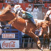 Travis Carlson riding bareback bronc, 1996 Stampede