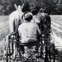 Horse-drawn harvester for peanuts, c. 1930
