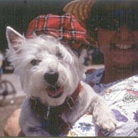 Scottish terrier dressed for Highland Games