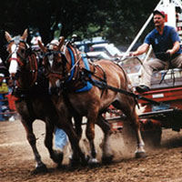 Draft Pulling Contest, 1999