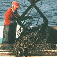 Homer Tyler uses a power dredge for oystering, 1992