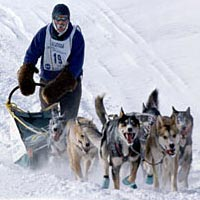 Musher Bob Maas on UP 200 Sled Dog Race, 1996