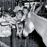 Two boys with a mule at Children's Barnyard