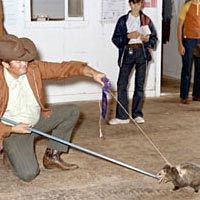 Man displaying pet possum at 1973 Fair