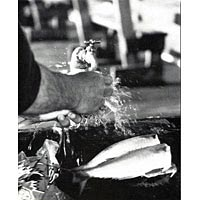 """Cleaning the Catch"" - 1997 NCSF Photo Contest Winner, B & W Division"
