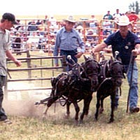 Lightweight pony pull, July 1999
