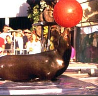 Trained sea lions perform at New York State Fair, 1999