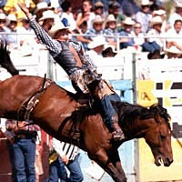 Travis Whiteside rides Copen Heckle in 1998 Pendleton Round-Up
