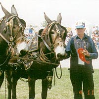 Mule Show, April 1996