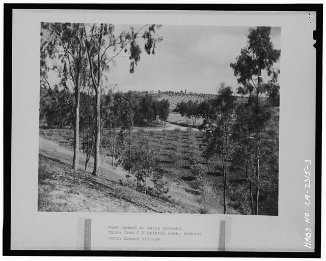 3.  ORCHARDS. CAPTION READS 'TAKEN FROM C. H. BRISTOL HOME, LOOKING NORTH TOWARD VILLAGE.' - Rancho Santa Fe, Rancho Santa Fe, San Diego County, CA