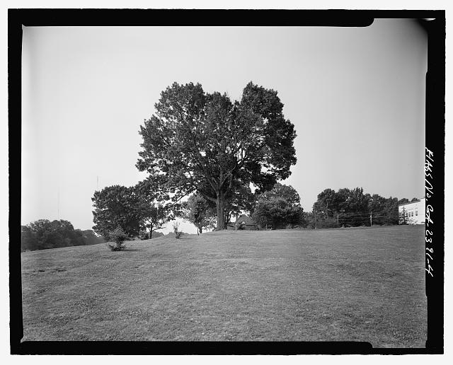 FACING SOUTH OF LANDSCAPING IN NORTHWESTERN PORTION OF PARK - Candler Park Historic District, Roughly bounded by Moreland, Dekalb, McLendon & Harold Avenues, Matthews Street  & Clifton Terrace, Atlanta, Fulton County, GA