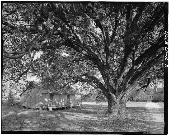2.  View of school teacher's house with live-oak tree in front yard. - Laurel Valley Sugar Plantation, School House, 2 miles South of Thibodaux on State Route 308, Thibodaux, Lafourche Parish, LA