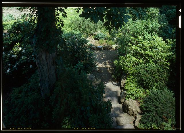 56.  VIEW LOOKING DOWN THE STEPS AND INTO THE HOLLOW FROM ABOVE.  VIEW INCLUDES HISTORIC SHAGBARK HICKORY TREE.  (DUPLICATE OF HABS No. MA-1168-21) - Fairsted, 99 Warren Street, Brookline, Norfolk County, MA