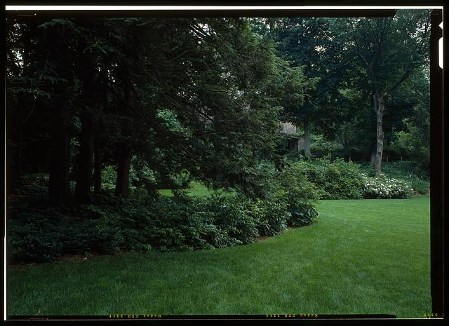 68.  VIEW OF THE SOUTH LAWN EDGE TOWARD THE WEST SLOPE.  VIEW INCLUDES LEUCOTHOE AND CANADIAN HEMLOCK ON THE LEFT.  (DUPLICATE OF HABS No. MA-1168-34) - Fairsted, 99 Warren Street, Brookline, Norfolk County, MA