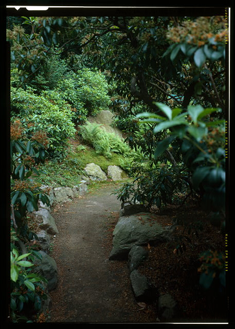 78.  VIEW LOOKING SOUTH ALONG THE ROCK GARDEN PATH, SHOWING THE LOCATION OF THE MOUNTAIN LAUREL.  (DUPLICATE OF HABS No. MA-1168-49) - Fairsted, 99 Warren Street, Brookline, Norfolk County, MA