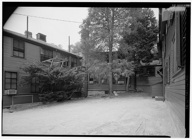 39.  VIEW LOOKING NORTH INTO THE REAR OF THE BUILDING COMPLEX AND SERVICE COURT.  (NOTE:  HISTORIC JAPANESE FALSE CYPRESS AND HINOKI FALSE CYPRESS IN CENTER; FRAMING FOR BLUEPRINT PRODUCTION EVIDENT ON SECOND STORY OF OFFICE WING TO LEFT). - Fairsted, 99 Warren Street, Brookline, Norfolk County, MA