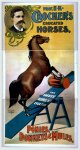 Prof. E.K. Crocker's educated horses, ponies, donkeys & mules (poster)