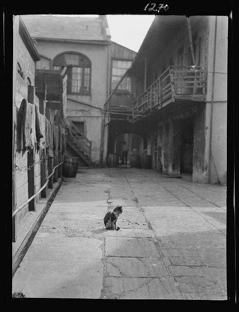 Courtyard with a cat, New Orleans