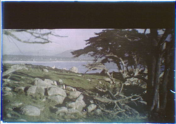 Cypress trees and seacoast in the Carmel, California area