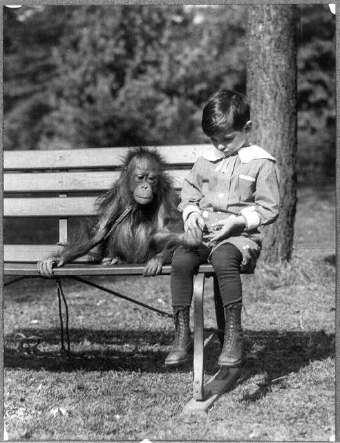 [Boy seated with orangutan on bench at the National Zoo, Washington, D.C.]
