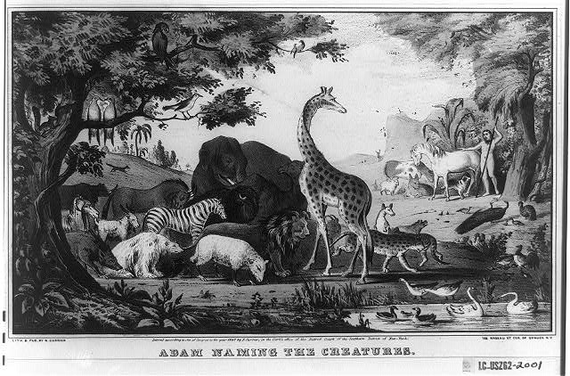 Adam naming the creatures/Adam Llamo los Animales