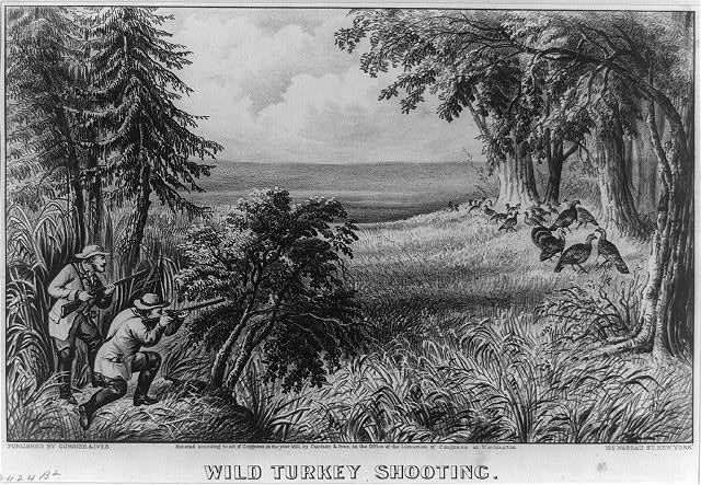 Wild turkey shooting