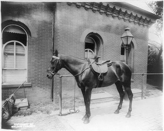 White House stables - Mrs. Roosevelt's mare