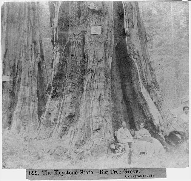 The Keystone State - Big Tree Grove, Calaveras County