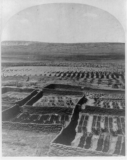 Gardens surrounding the Indian Pueblo of Zuni, in which are raised a variety of vegetables, such as pepper, onions, garlic, etc.