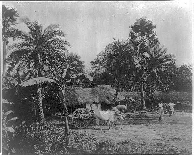 [Africa. Valley of Senegal. Village scene showing ox carts.]