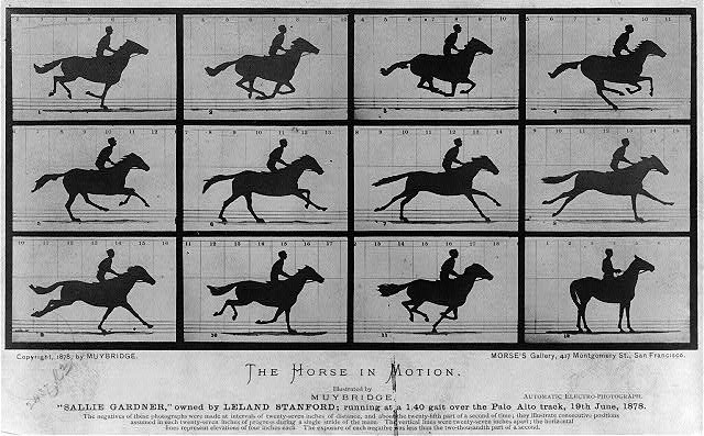 "The Horse in motion. ""Sallie Gardner,"" owned by Leland Stanford; running at a 1:40 gait over the Palo Alto track, 19th June 1878"