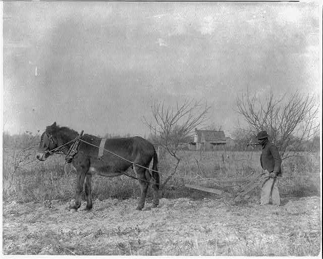 [American Indian and African American students at Hampton Institute, Hampton, Va. 1900(?) - man behind horse-drawn plow]
