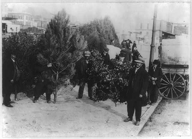 [African Americans selling Christmas trees and holly, Washington, D.C.]