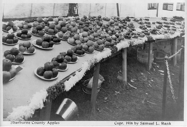 [Prize winners at Sherburne County fair, Minnesota - exhibit of apples]