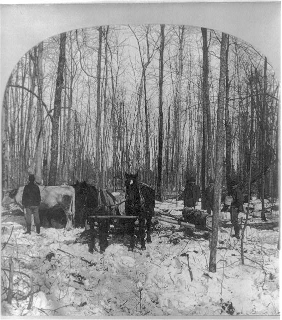 Logging in the pine forest, Michigan