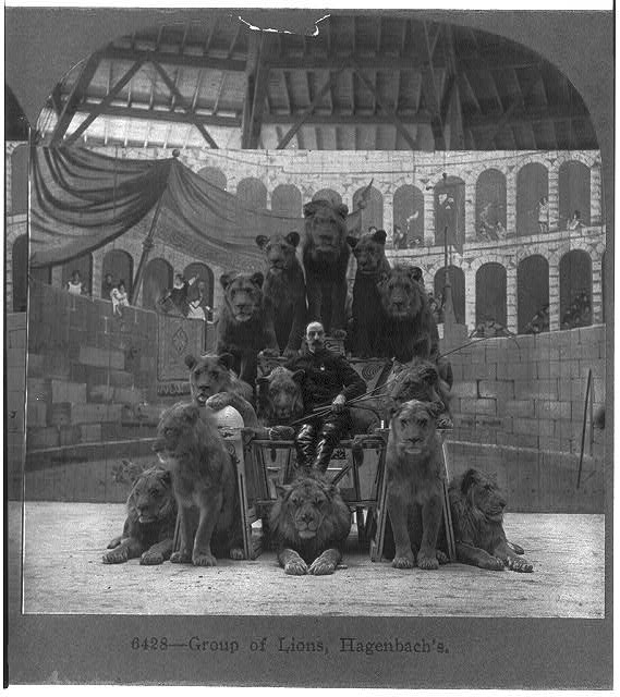 Group of Lions, Hagenbach's
