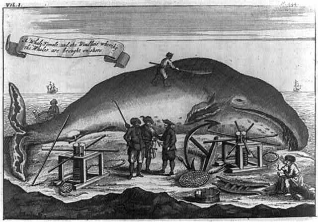 """A whale female and the windlass whereby the whales are brought on shore"""