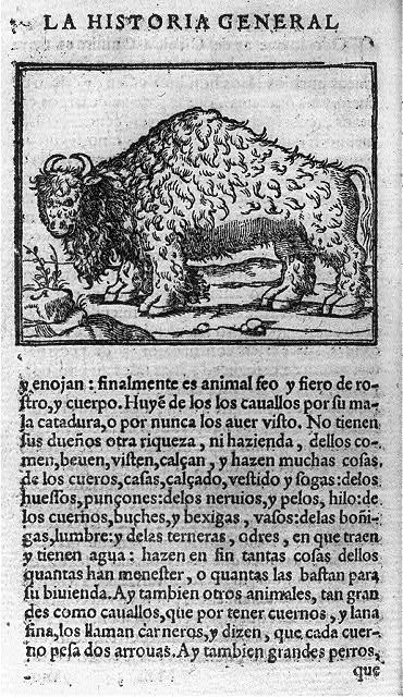 [American Bison; illus. on full page with descriptive text in Spanish]