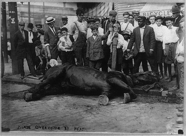 New York City: Horse overcome by heat
