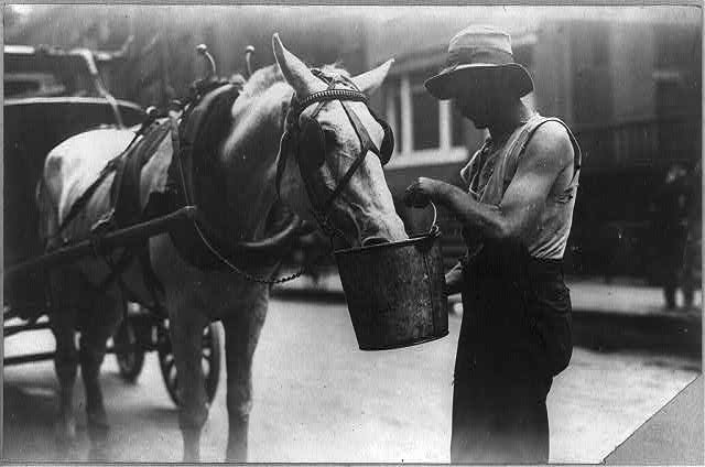 New York City: Harnessed horse eating or drinking from a bucket, which a man is holding