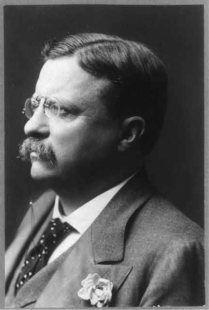 [Theodore Roosevelt, head-and-shoulders portrait, turned left]