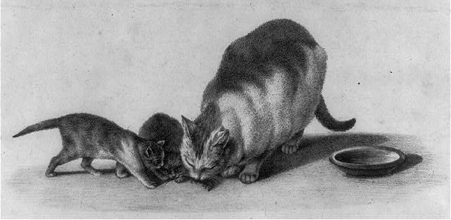 [Cat and two kittens]