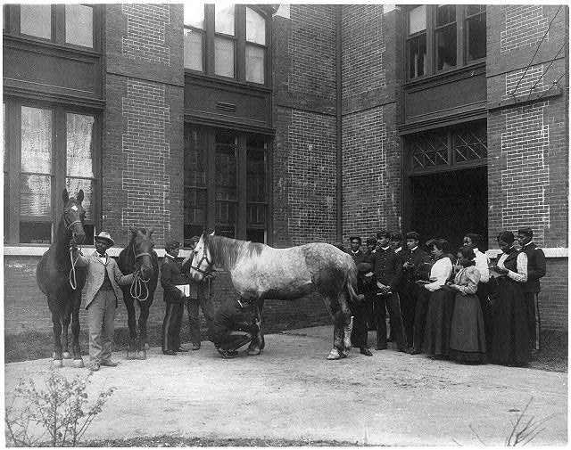[African American students judging horses - Hampton Institute]