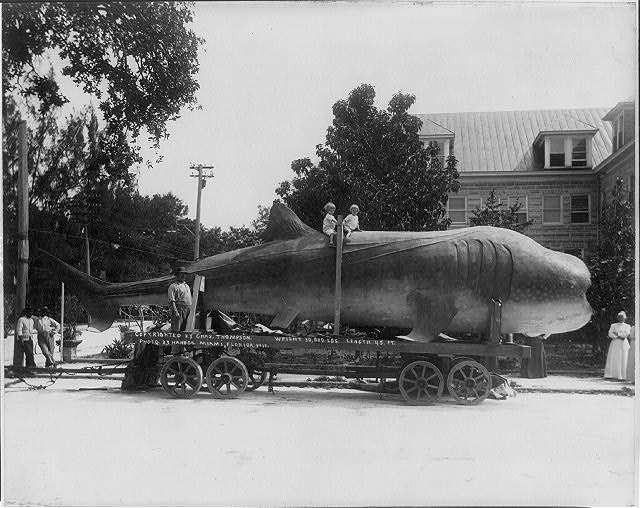 [45 ft long shark (whale?) on trailer; 2 children on its back