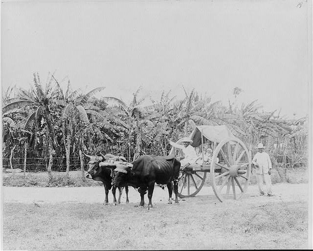 [Man, woman and child in ox-drawn cart]