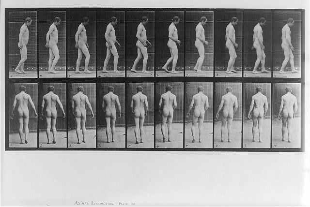 Animal Locomotion: [20 frames of naked man walking - rear and rt. profile views; plate 443]