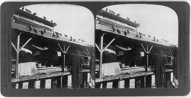 [Vultures on roof of pier in Panama harbor]