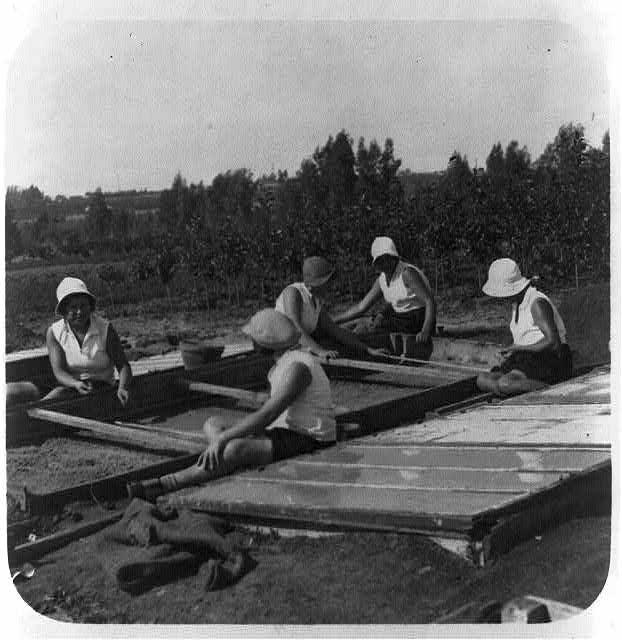 Borochov - Girls' farm, [5 Jewish girls] working among glass frames